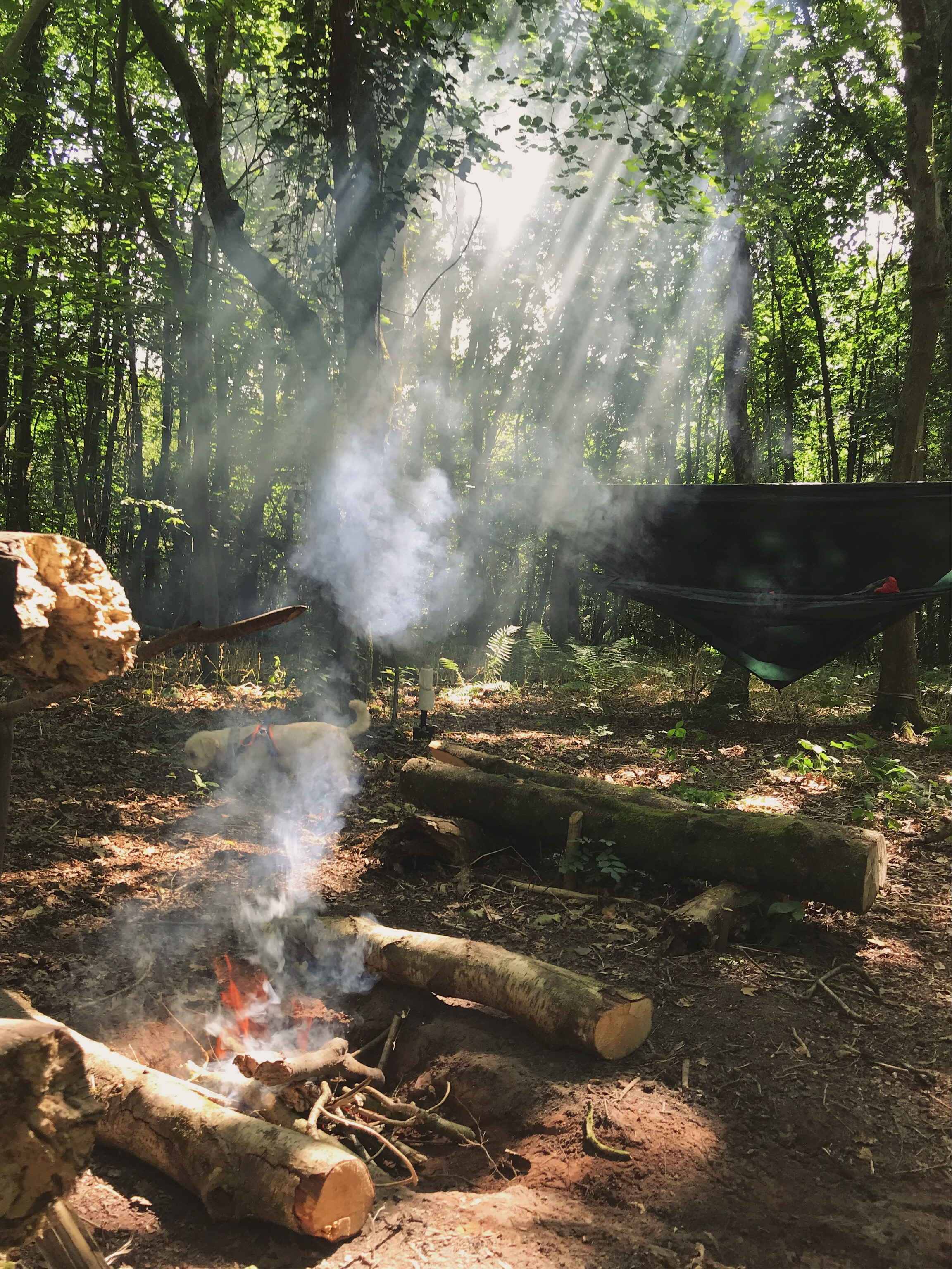 A campfire in the woods, smoke amongst rays of sunlight